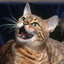 Mačka mijauče download besplatne slike pozadine za mobitele