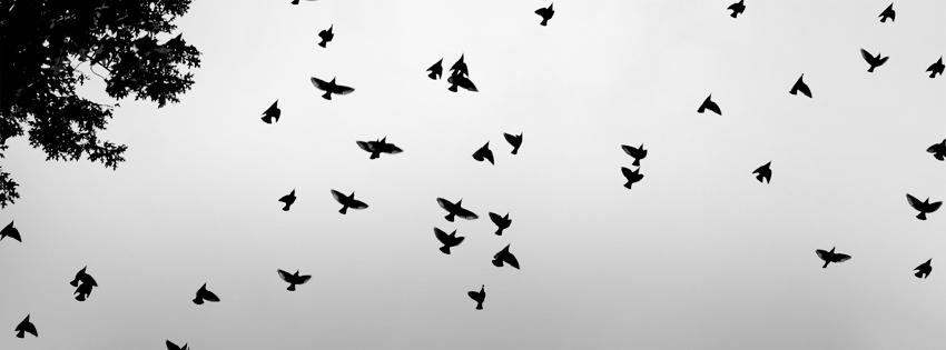 Flok Of Birds
