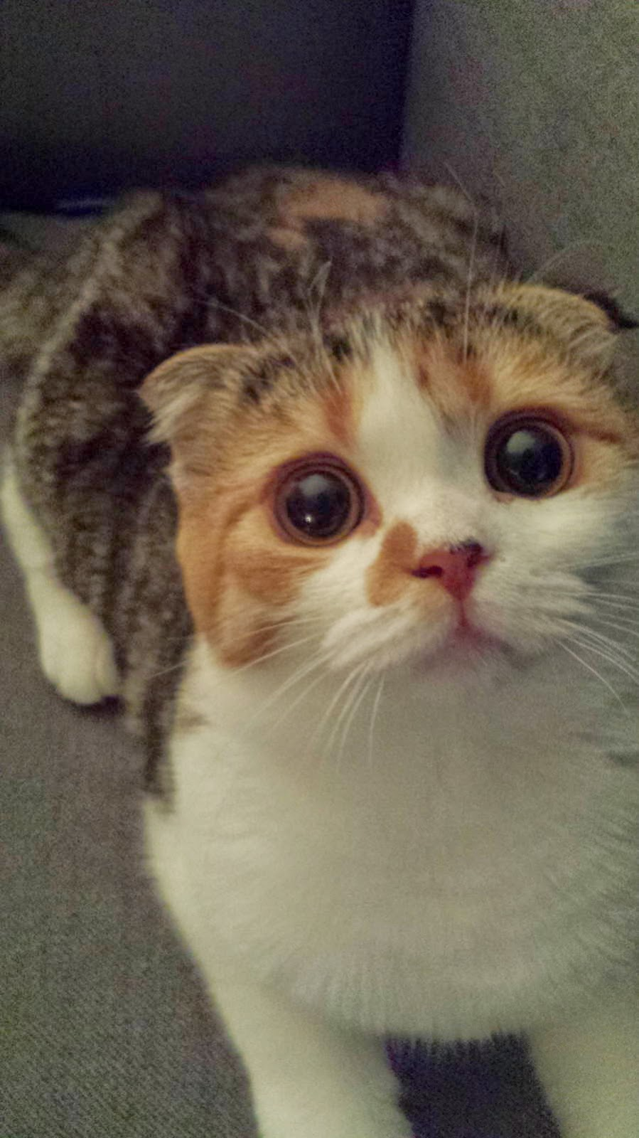 Funny cats - part 99 (40 pics + 10 gifs), cat pictures, cute cat with big eyes