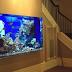 5 mẫu hồ cá treo tường đẹp nên tham khảo