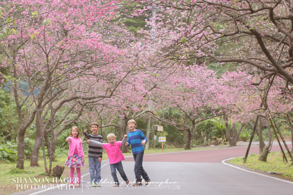 Cherry Blossoms in Okinawa by Shannon Hager Photography, Portland Children's Photographer