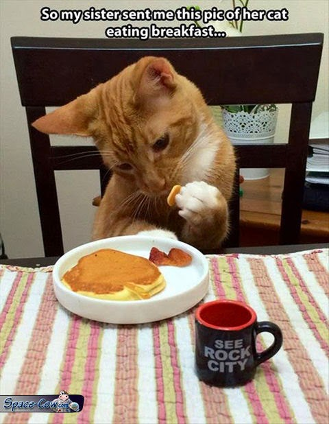 funny animals kitty breakfast