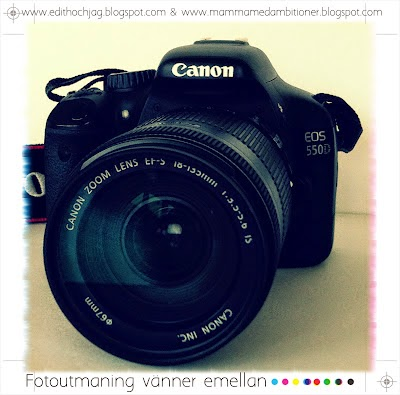 Fotoutmaning / Vänner emellan