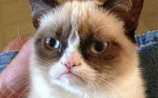Se hizo millonario por vender gatos