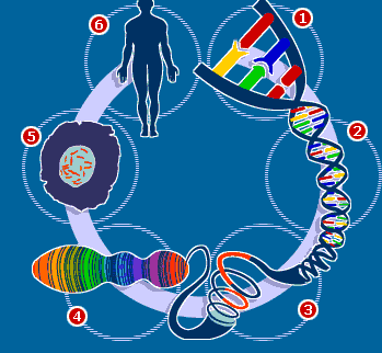 Resultado de imagen de El Proyecto Genoma Humano