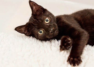 Black kitten Mew at our Bridgend Adoption Centre