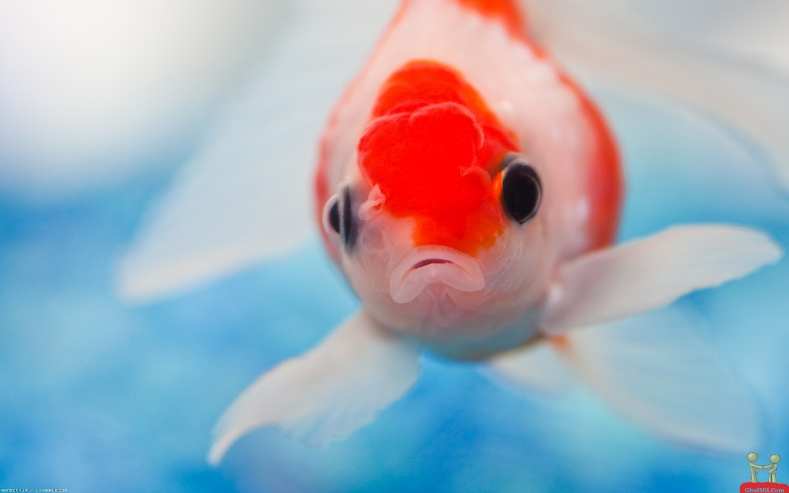 Animals Wallpapers Wallpapers Of Cute Fishes