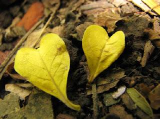 ...el bosque se enamora...