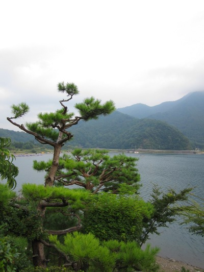 бонсаи в природе, японская сосна