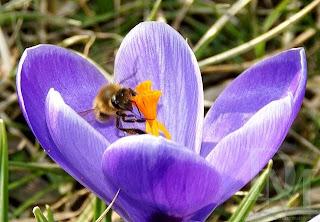 Wiosna 2011 - fot. Dariusz Małanowski