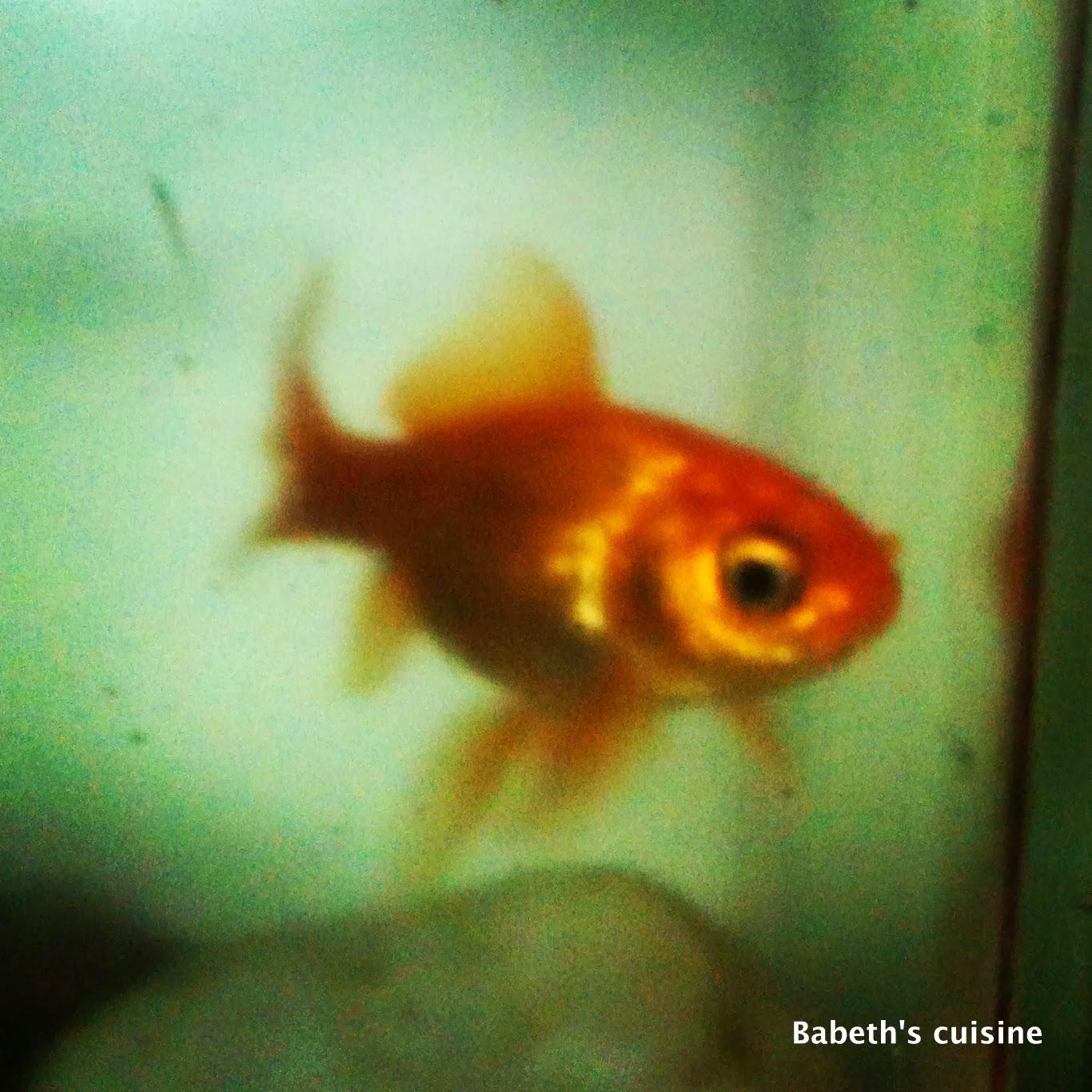 Babeth 39 s cuisine association d 39 id e peut tre un peu for Achat d un poisson rouge