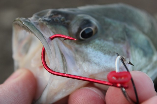 Big fishing trailer hooks for fall for Giant fish hook