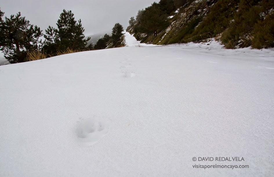 Ruta Fuente Los Frailes Collado de Bellido Trekking Nieve