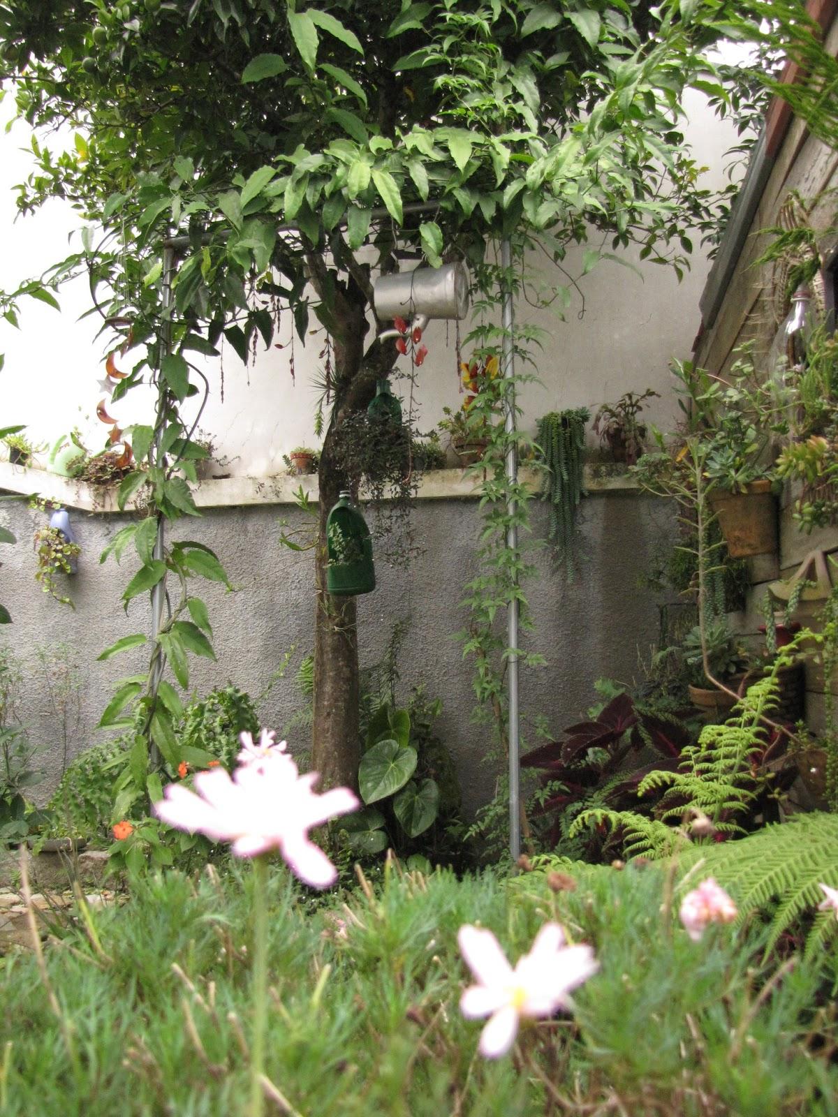 meu quintal meu jardim : meu quintal meu jardim:tudo o que brota e floresce no meu jardim