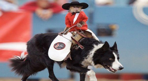 Monyet Ini Kendarai Anjing Bak Rodeo [ www.BlogApaAja.com ]