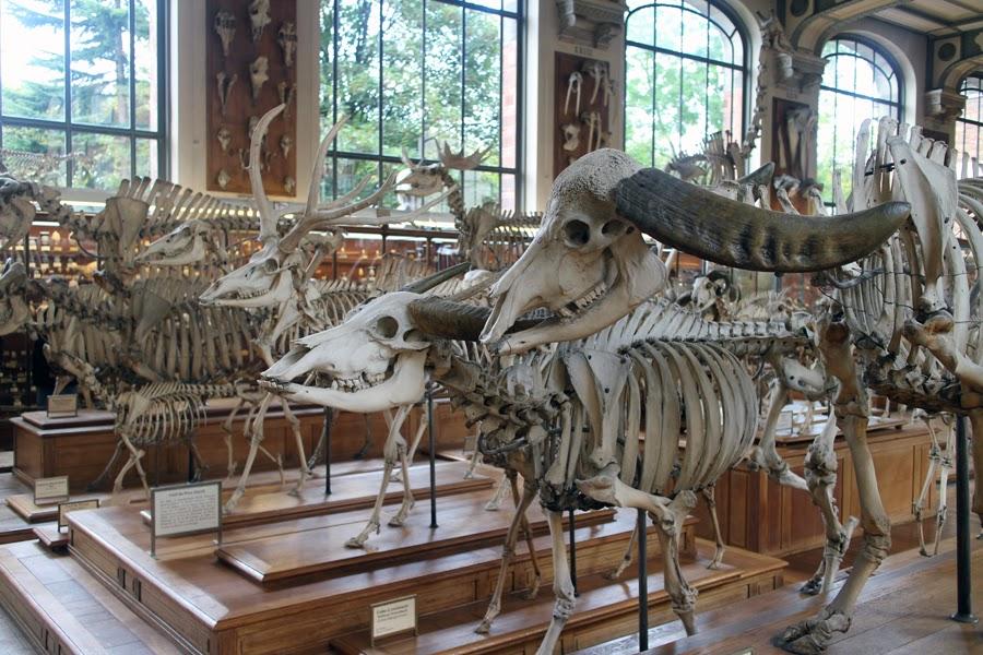 Paris mus um d 39 histoire naturelle jardin des plantes chavanitas - Jardin des plantes paris dinosaures ...