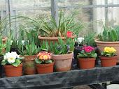 Plants in flower