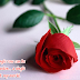 Quotes to impress girls around Rose day Special | Rose day quotes that will help to impress a girl