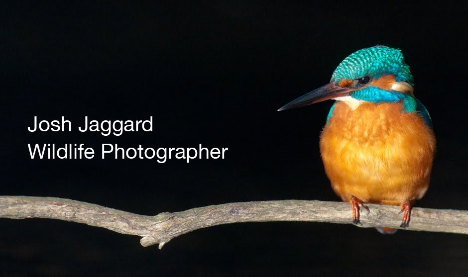 Josh Jaggard - Wildlife Photography