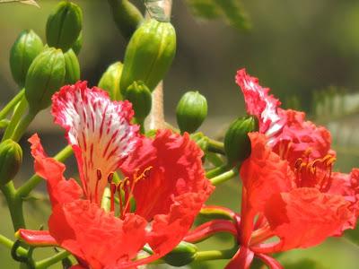 Bud N Flower