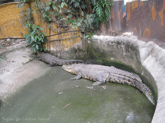 Children of Lolong at Manila Zoo