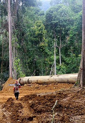 A big and sometimes dirty business: a logging operation in Indonesia.  (Credit: Coco Liu) Click to enlarge.