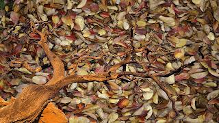 Arvore_despida._fundo transparente sobre texturas de folhas