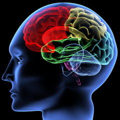 memori otak, otak manusia, daya ingat
