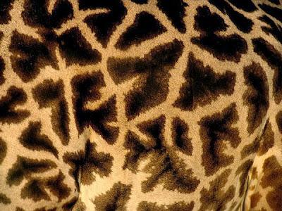10 Corak Haiwan Yang Cantik