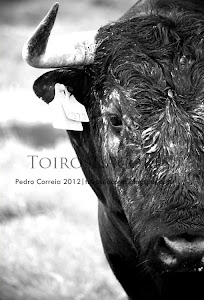 Toiros&Açores Gallery
