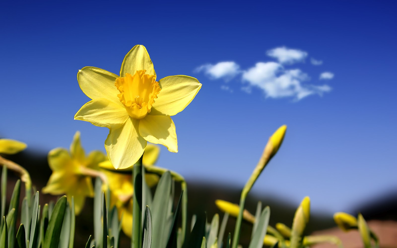 lente achtergronden hd - photo #24