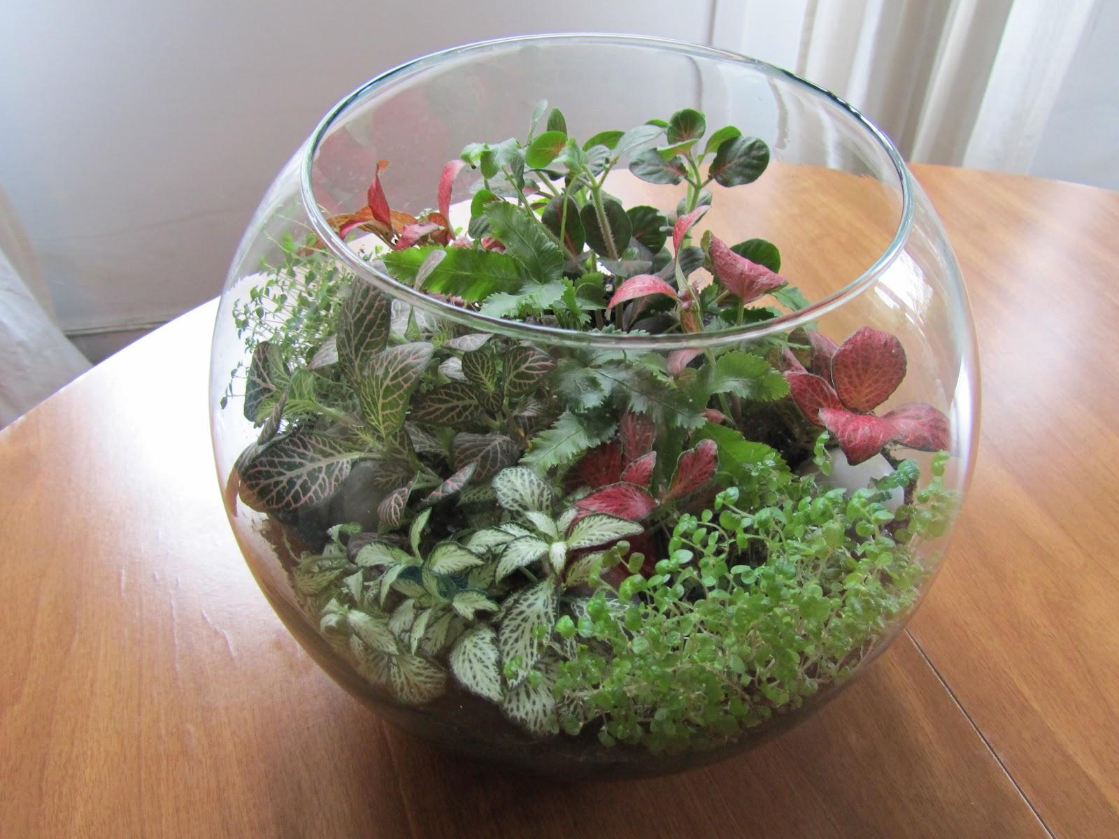 Crafteando que es gerundio junio 2012 - Plantas para terrarios ...