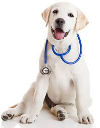 What it's like being a Veterinarian ~ Academic Excellence