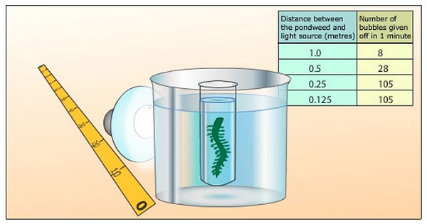 a lab experiment the influence of plants on water Strongly affected and dead cells release its biogens and even toxins into the water, which influence by plants during the experiment lab , vilnius student.
