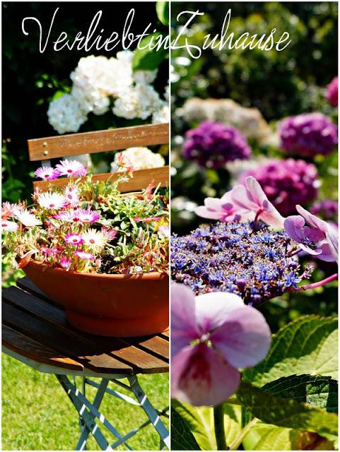 Blumen im Detail: Links Mittagsblume. Rechts Hortensie.
