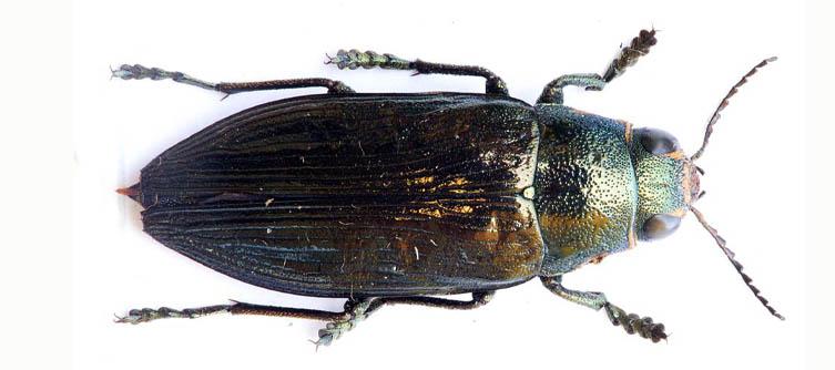 Boletín Sociedad Andaluza de Entomología Vol. 8