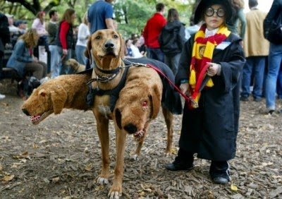 DIY halloween dog costume harry potter dogs