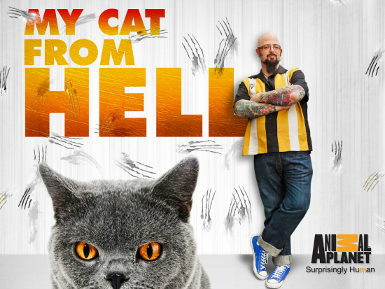 my-cat-from-hell