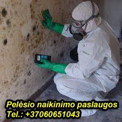 Pelėsio naikinimo paslaugos tel.:+37060651043