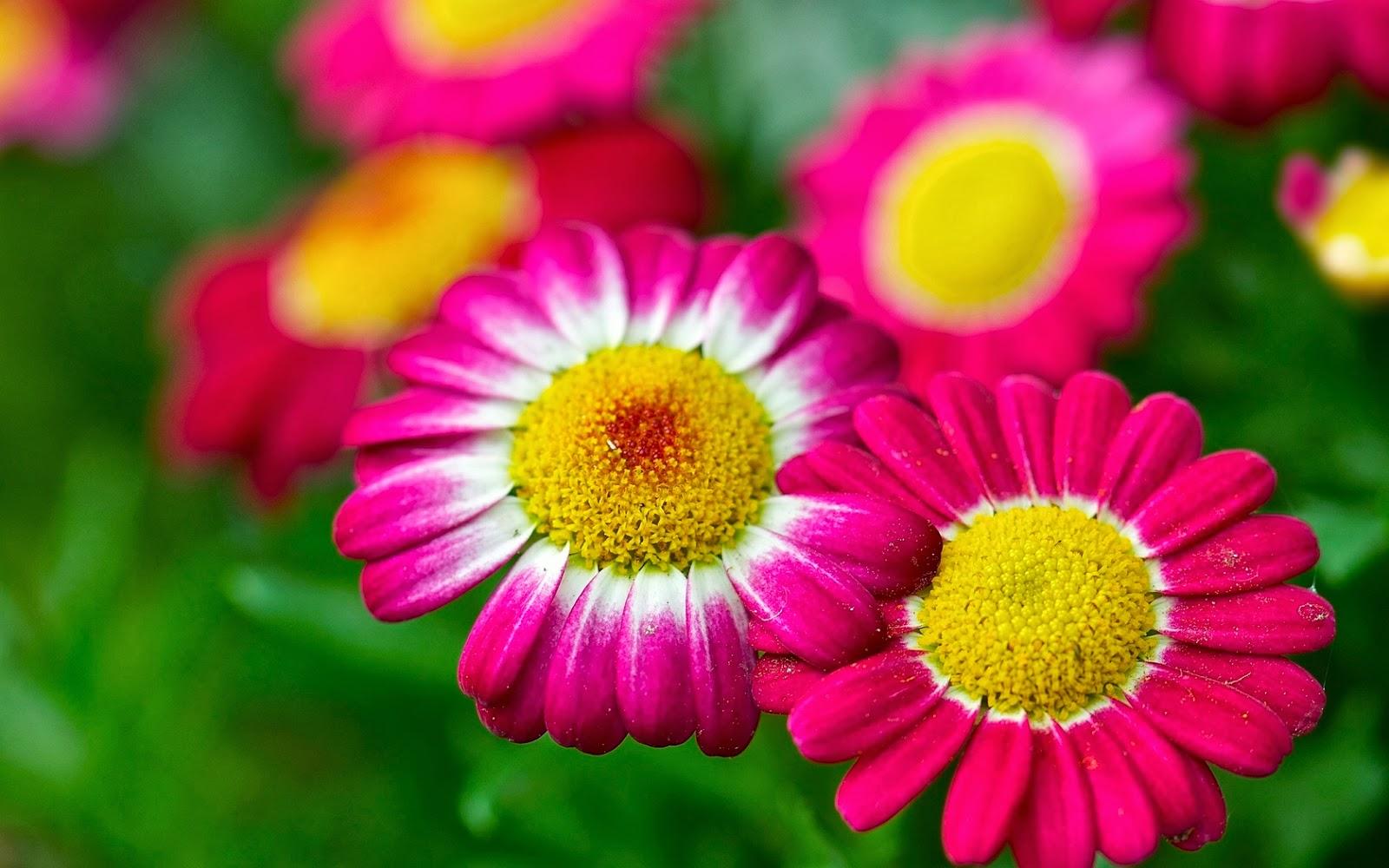 Flores hermosas del mundo hd imagui - Flores mas bonitas ...