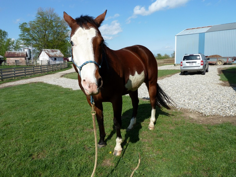 Sonshine Saddlery: If anyone is looking for the cutest ...