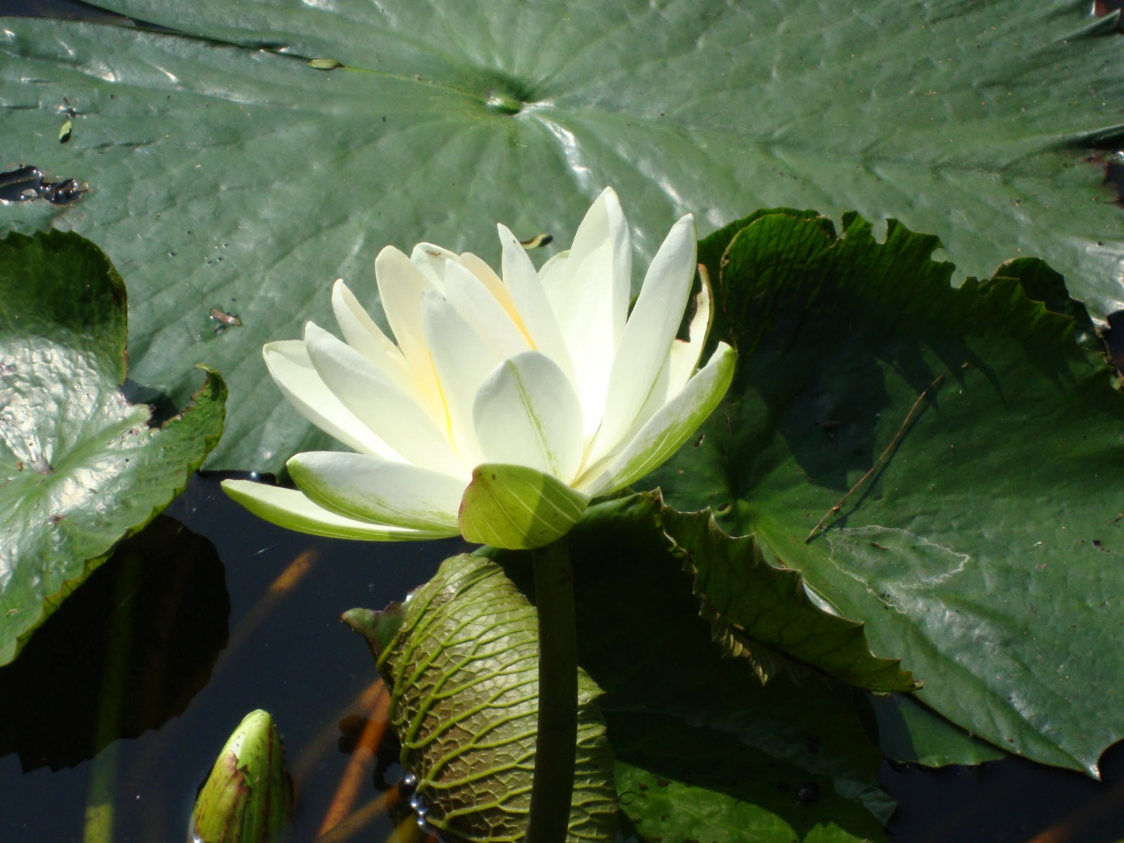 The World The Flower Lotus Enlightment And Detachment