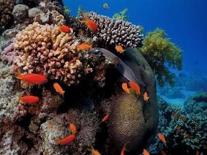 Maravilha submarina