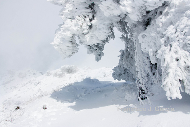 Impresiones del infinito blanco for Blanco nieve