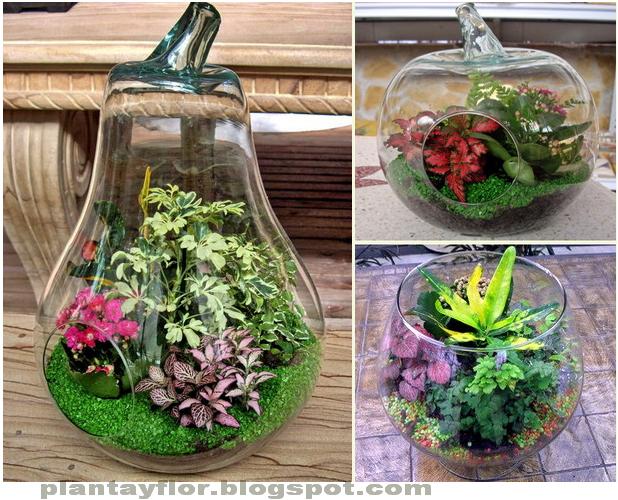 Plantas y flores jardines en botella for Plantas pequenas para jardin