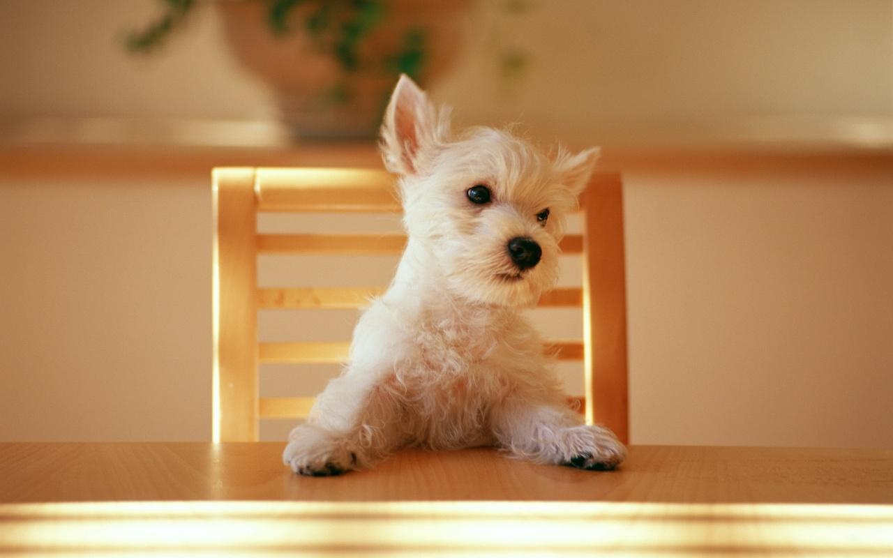 http://2.bp.blogspot.com/-8Rd6yNVdphk/Tb5x17Lq3hI/AAAAAAAAIks/2N2SUtjaaGs/s1600/dog-at-the-table-wallpapers_8862_1280x800.jpg