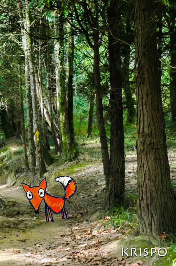 dibujo de zorro en fotografia de bosque en hondarribia