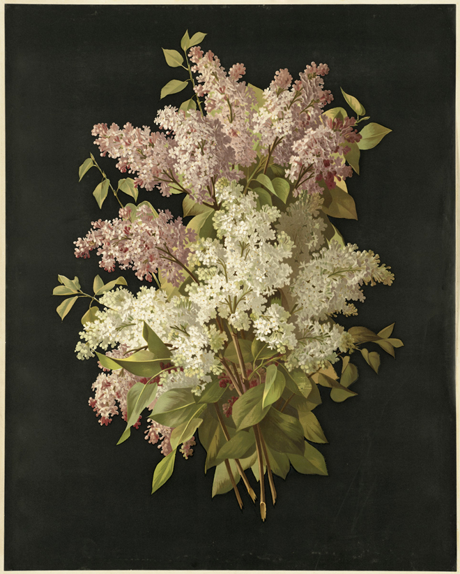 Bouquet of Lilacs, Raoul-Victor-Maurice Maucherat de Longpre, 1861-1897