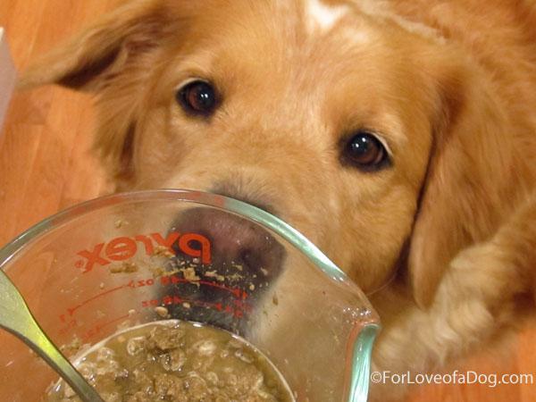 Refrigerating Dog Food