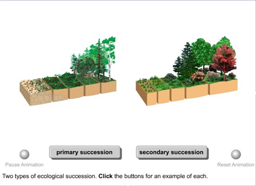 Ecology Succession Worksheet – Primary and Secondary Succession Worksheet